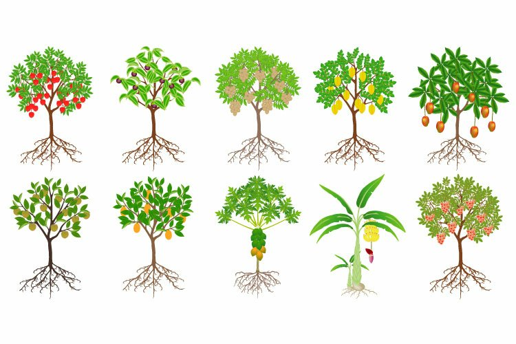 Set of exotic trees with fruits on a white background. example image 1