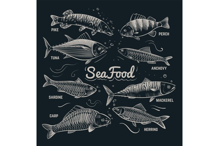 Sketch fishes seafood. Herring, trout, flounder, carp, tuna, example image 1