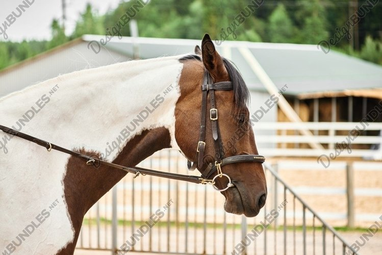 Portrait of a white and brown horse on a ranch in a bridle example image 1
