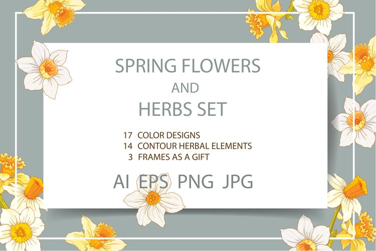 Set of spring flowers and herbs for design.
