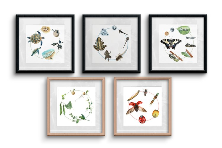 Watercolour Life Cycles Poster Bundle