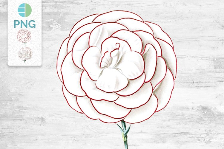 Carnation Clipart Flower example image 1