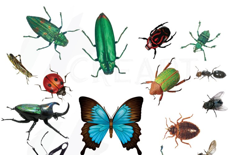 Watercolor insects and bugs clipart pack, vectors for commercial or personal use (vector, png, jpg, silhouette studio files). Lady bug, bee