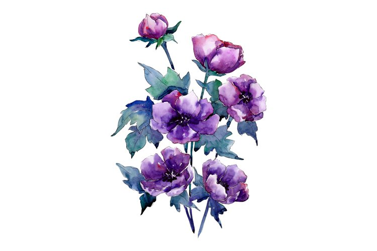 Bouquet of purple poppy PNG watercolor set example image 1