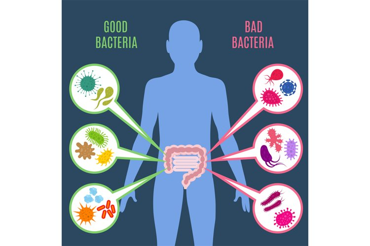 Intestinal flora gut health vector concept with bacteria and