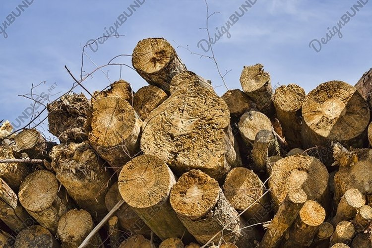 hardwoods cut down example image 1