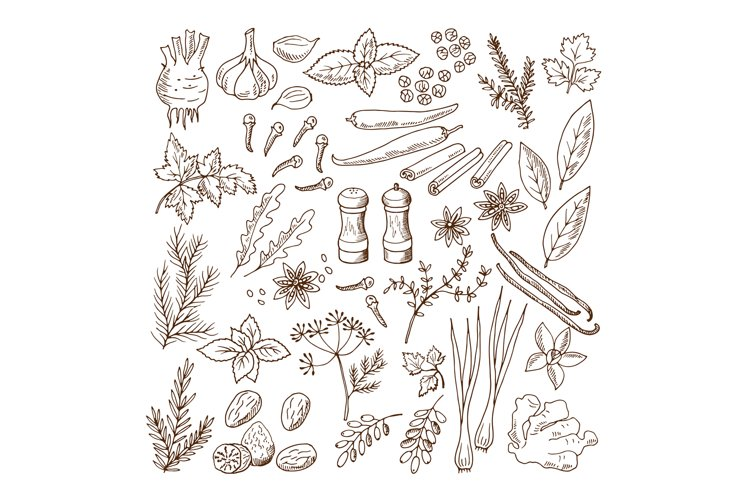 Hand drawn illustrations of different herbs and spices. Vect example image 1