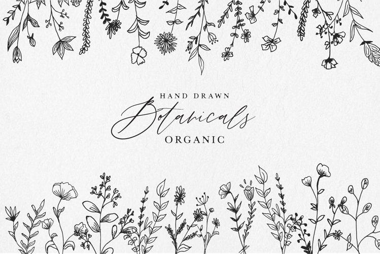 Hand Drawn Botanical Vol 1
