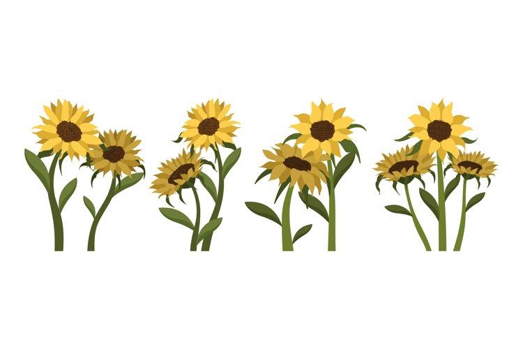 Sunflower Illustrations example image 1
