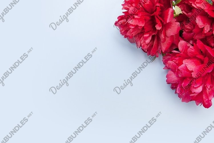 Top view peonies flowers with copy space on color background example image 1