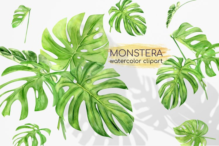 Watercolor Monstera Clipart. Tropical Clipart. Green Leaves example image 1