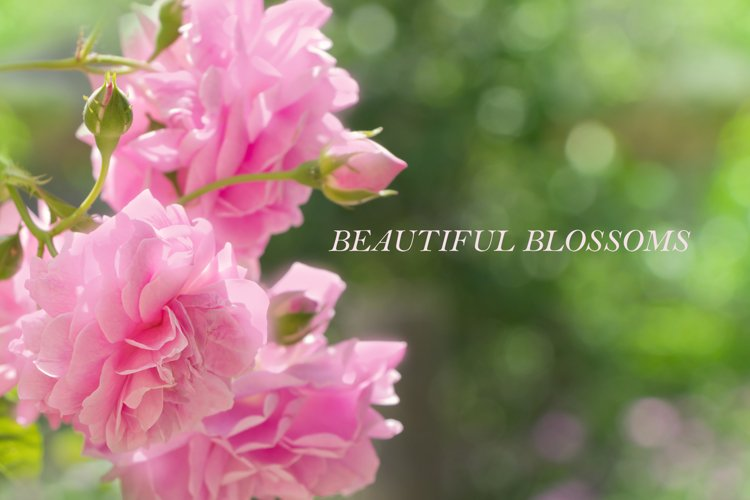 Beautiful blossoms nature backgrounds