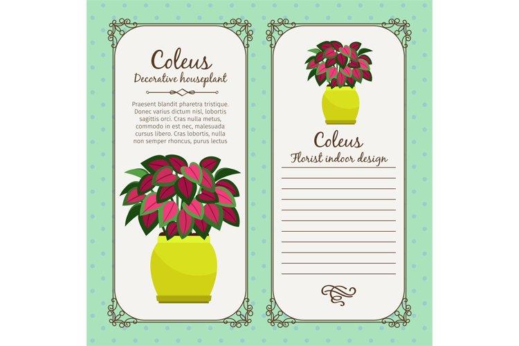 Vintage label with coleus plant example image 1