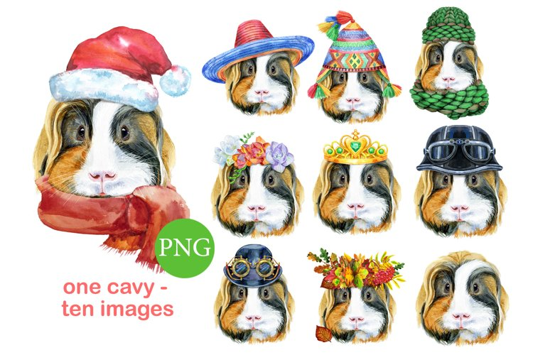 Cute watercolor guinea pig example image 1