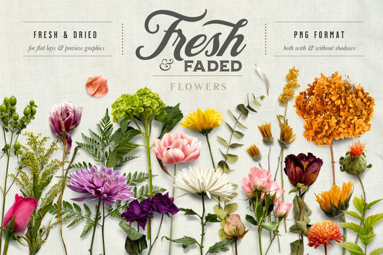 Fresh & Dried Flower Scene Creator & Flat Lay example image 1