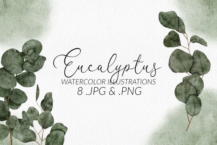 8 Watercolor Eucalyptus Leaf Illustration Set