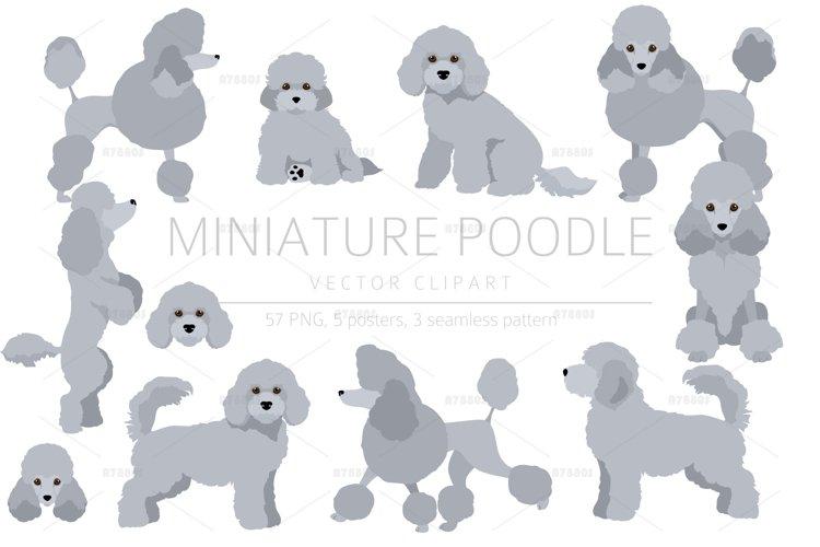 Miniature poodle clipart