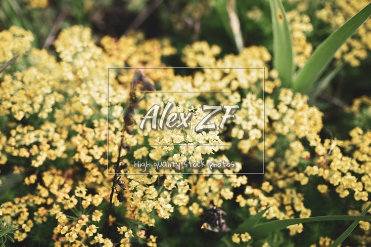 Yellow little flowers. Creative color. Many beautiful flower