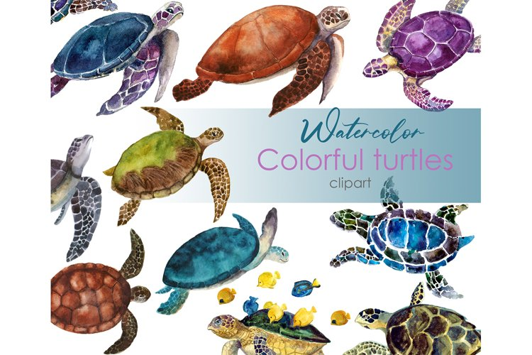 Watercolor Clipart. Ocean Turtle Animal Clipart. Sea turtle