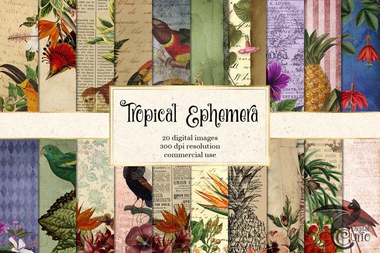 Tropical Ephemera Digital Paper
