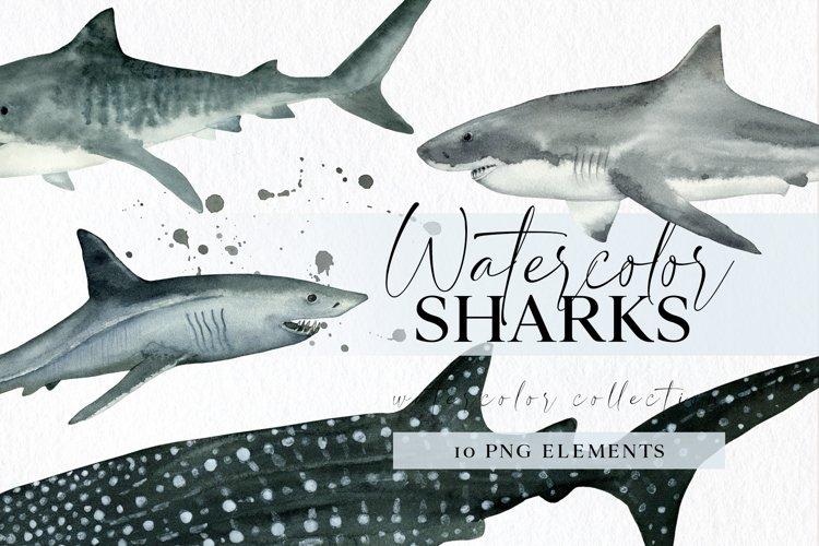 Hand drawn shark png clipart watercolor nautical clip art