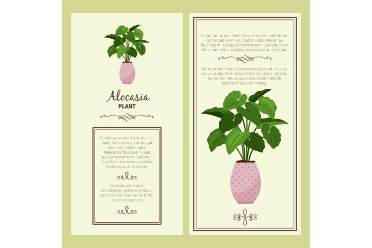 Greeting card with alocasia planton example image 1