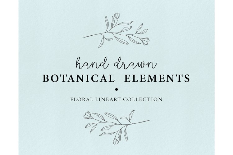 Hand drawn floral illustrations - botanical graphics lineart example image 1
