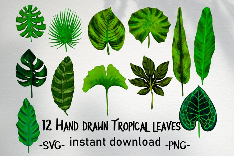 Hand drawn tropical leaves bundle example image 1