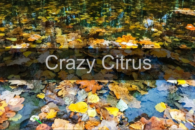 Bright yellow autumn leaves under water background closeup example image 1