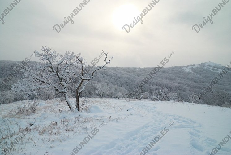 Winter landscape- icy forest with beautiful trees example image 1