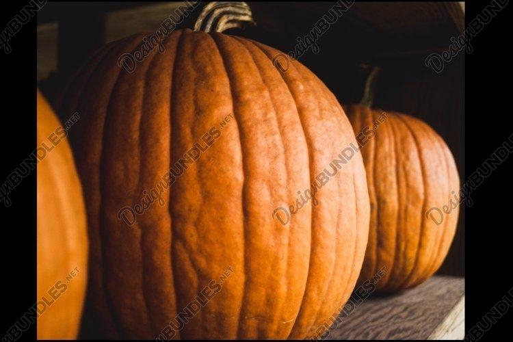 Pumpkins example image 1