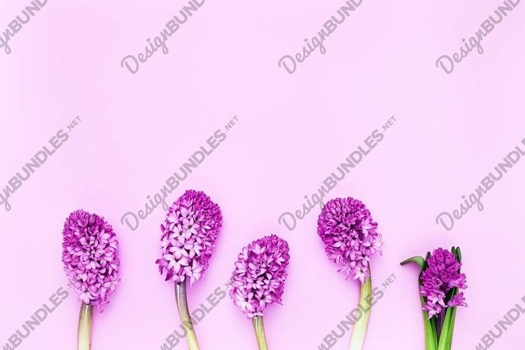 Pink hyacinths border on pink background. example image 1