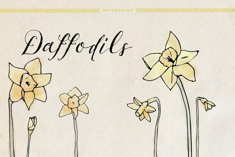 Watercolor Daffodils example image 1