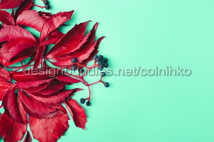 Creative layout made of red leaves and blue berries example image 1