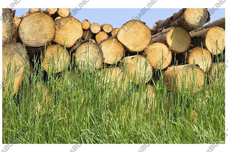 tree trunks in the forest example image 1