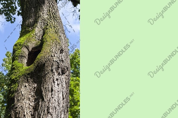 tree trunk example image 1