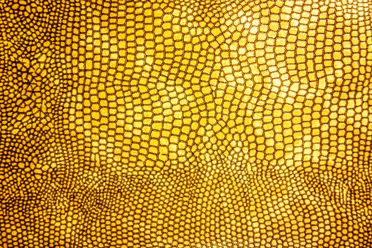 Close Up of Abstract Gold Real Snake Skin Snake Print example image 1