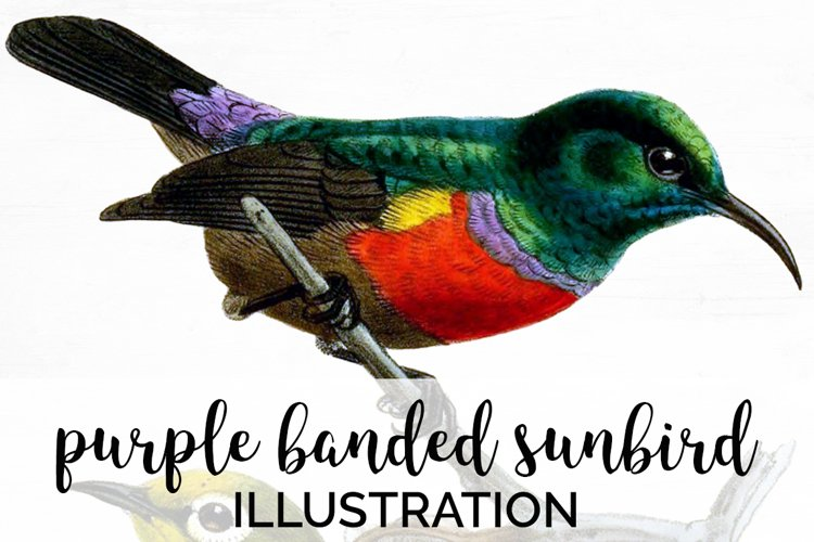 Bird Clipart Vintage example image 1