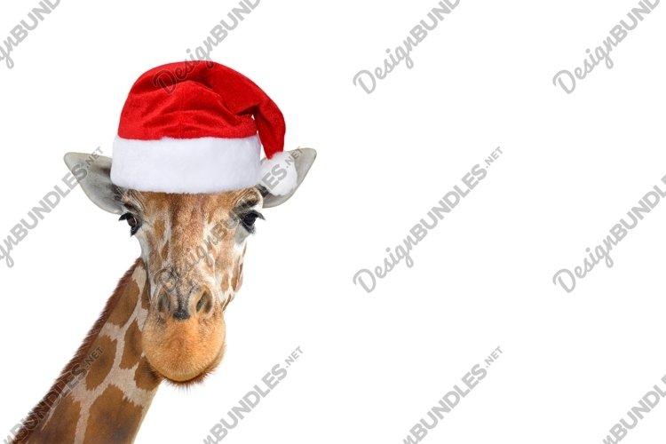 Cute and funny giraffe head in christmas or Santa hat