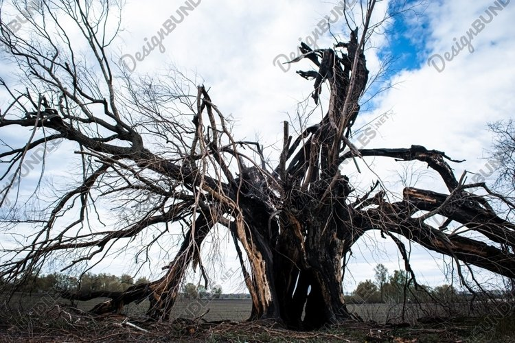 Art dramatic tree after being struck by lightning. example image 1