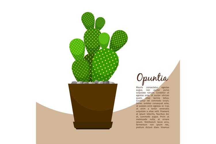 Opuntia indoor plant in pot banner example image 1