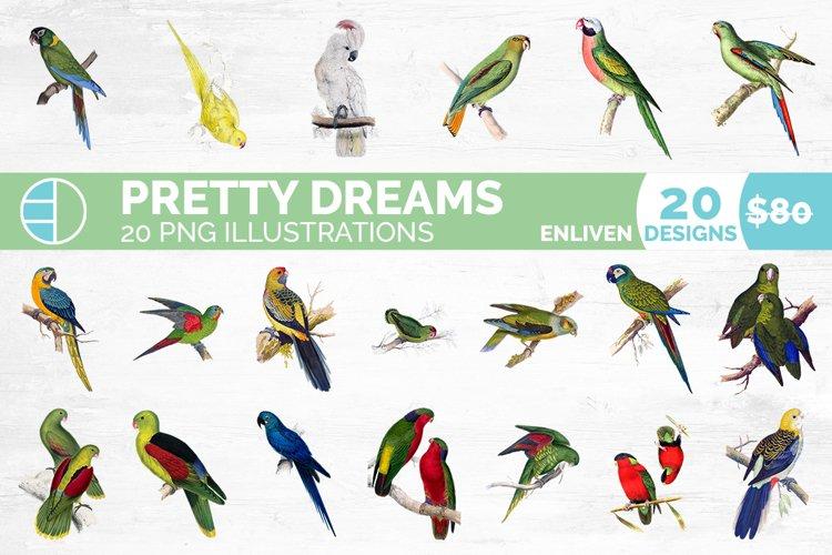 Parrot Bundle Birds Vintage Clipart Set