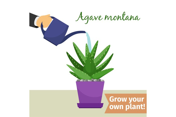 Hand watering agave plant illustration example image 1