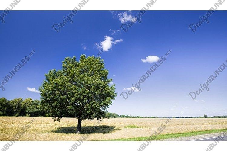 lone oak example image 1