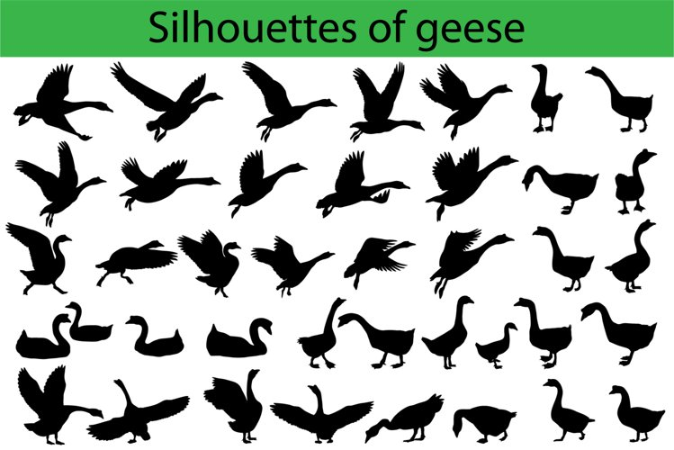 Silhouettes of geese