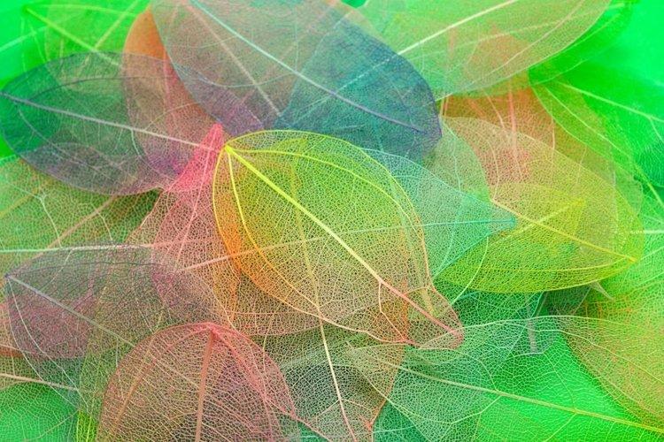 Colored leaves. Leaf texture pattern. Macro leaves example image 1