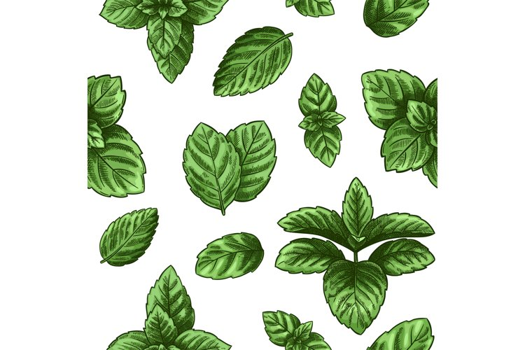 Mint seamless pattern. Green peppermint leaves, spearmint he example image 1