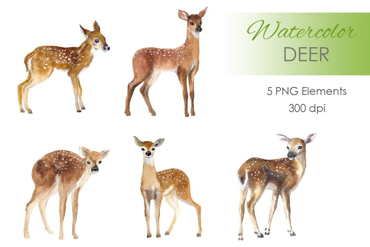 Watercolor deer Clipart. Woodland animal clipart example image 1