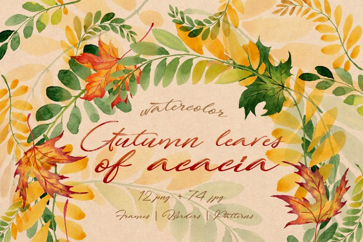 Autumn leaves of acacia PNG watercolor set example image 1