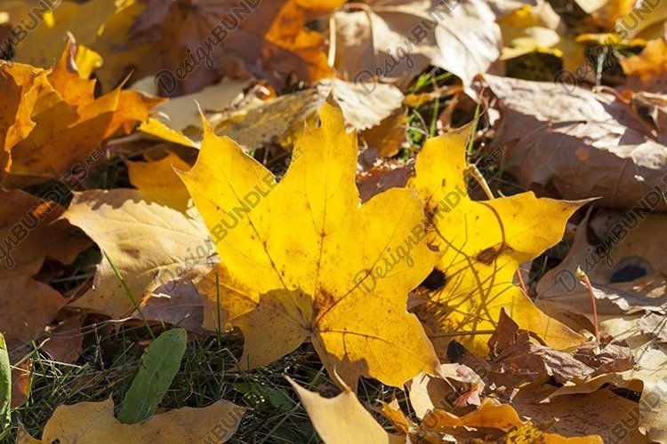 autumn yellow foliage example image 1